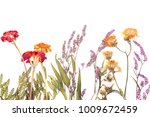 pressed and dried summer flower | Shutterstock . vector #1009672459