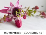 Passionfruit Flower  ...