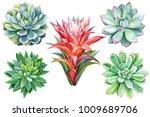 set set of tropical plants ... | Shutterstock . vector #1009689706