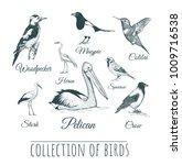 birds set. birds vector... | Shutterstock .eps vector #1009716538