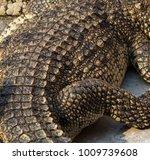 crocodile saltwater skin. hi res | Shutterstock . vector #1009739608