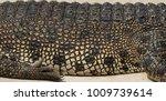 crocodile saltwater skin. hi res | Shutterstock . vector #1009739614