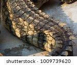 crocodile saltwater skin. hi res | Shutterstock . vector #1009739620