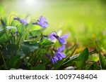 blooming in spring close up.... | Shutterstock . vector #1009748404