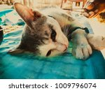 neutering dogs and cats in... | Shutterstock . vector #1009796074