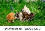 Little Tabby Kittens With...