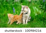 Little Tabby Kitten With Mother ...