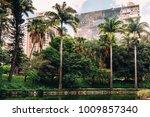 belo horizonte municipal park... | Shutterstock . vector #1009857340