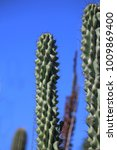 tall rounded cactus   Shutterstock . vector #1009869400