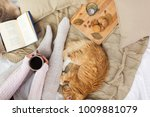 Stock photo pets hygge and people concept woman with coffee book cookies and red tabby cat sleeping on 1009881079