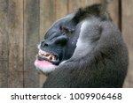 drill close up portrait   Shutterstock . vector #1009906468