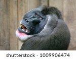 drill close up portrait   Shutterstock . vector #1009906474