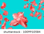 Stock photo pattern of red rose petals on a turquoise background flat lay 1009910584
