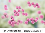 veillonella bacteria  gram... | Shutterstock . vector #1009926016