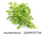 fresh green parsley  parsley... | Shutterstock . vector #1009955734
