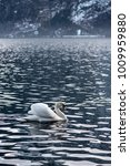 lone isolated swan swimming on... | Shutterstock . vector #1009959880