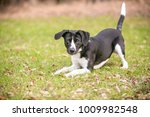 a playful black and white mixed ... | Shutterstock . vector #1009982548