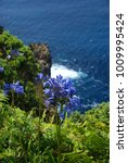 Small photo of Cliff with african lily, Azores