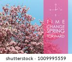 deciduous magnolia tree with... | Shutterstock . vector #1009995559
