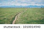 a narrow path crosses the grass ... | Shutterstock . vector #1010014540
