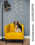 young beagle sit on yellow... | Shutterstock . vector #1010018959