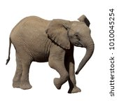 baby elephant. african elephant ... | Shutterstock . vector #1010045254