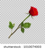 Stock vector vector illustration of photo realistic highly detailed flower of red rose isolated on transparent 1010074003