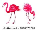 pink flamingo watercolor | Shutterstock . vector #1010078278