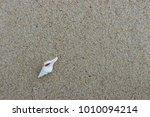 fossil shell on the sand beach  ... | Shutterstock . vector #1010094214