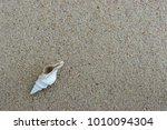 fossil shell on the sand beach  ... | Shutterstock . vector #1010094304