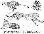 vector drawings sketches... | Shutterstock .eps vector #1010098270