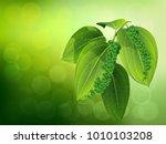 black pepper leaves stock... | Shutterstock .eps vector #1010103208