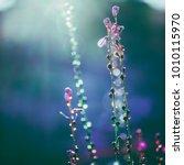 beautiful little wite wild... | Shutterstock . vector #1010115970