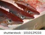 Spiny Dogfish Shark. Fresh...