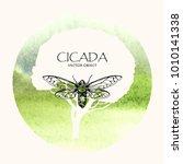 vector illustration. cicada .... | Shutterstock .eps vector #1010141338