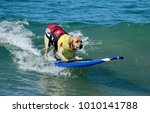 huntington beach  ca  ... | Shutterstock . vector #1010141788