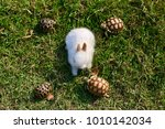 white tiny rabbit surround by... | Shutterstock . vector #1010142034