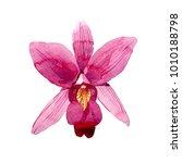wildflower pink orchid flower... | Shutterstock . vector #1010188798