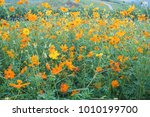 yellow flower background | Shutterstock . vector #1010199700