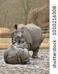indian rhinoceros mother and a... | Shutterstock . vector #1010216308