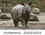 indian rhinoceros in the... | Shutterstock . vector #1010216314