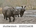 indian rhinoceros mother and a... | Shutterstock . vector #1010216638