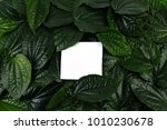 green leaves background with... | Shutterstock . vector #1010230678