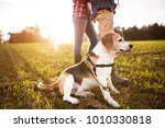 Stock photo senior couple with dog on a walk in an autumn nature 1010330818