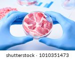 raw meat sample in laboratory... | Shutterstock . vector #1010351473