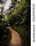 Small photo of Dirt path in tropical jungle in Abel Tasman National Park in New Zealand.