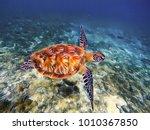 sea turtle in sea water retro... | Shutterstock . vector #1010367850