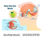 How Eye Work Medical...