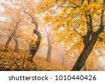 scary trunk in the fog   few... | Shutterstock . vector #1010440426