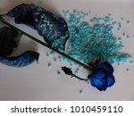 blue roses  tenderness  stones | Shutterstock . vector #1010459110